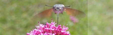 national-moth-night-09