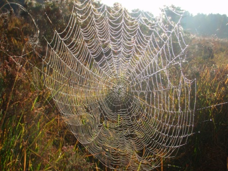 spiders web sm