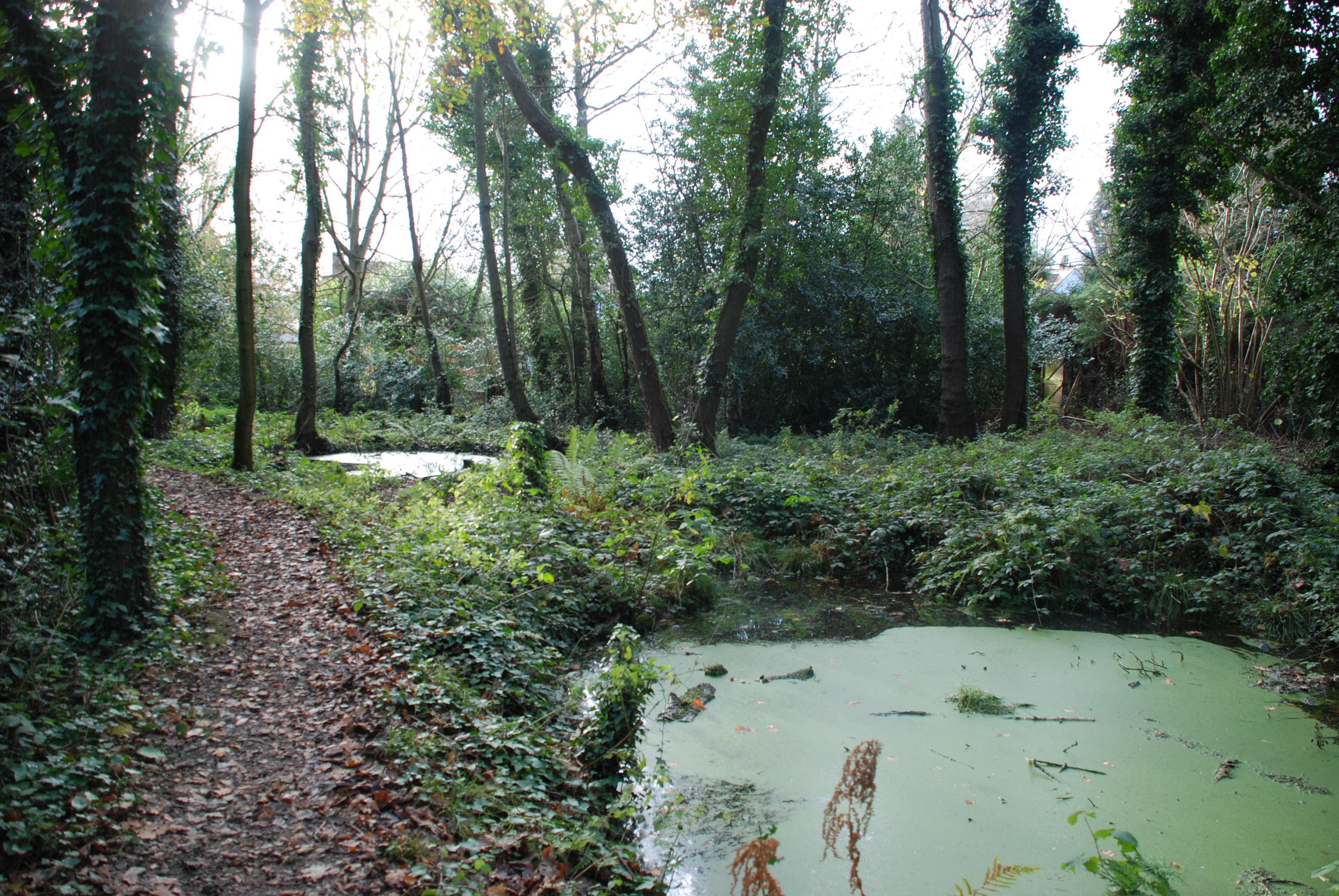 The smaller ponds in December 2009