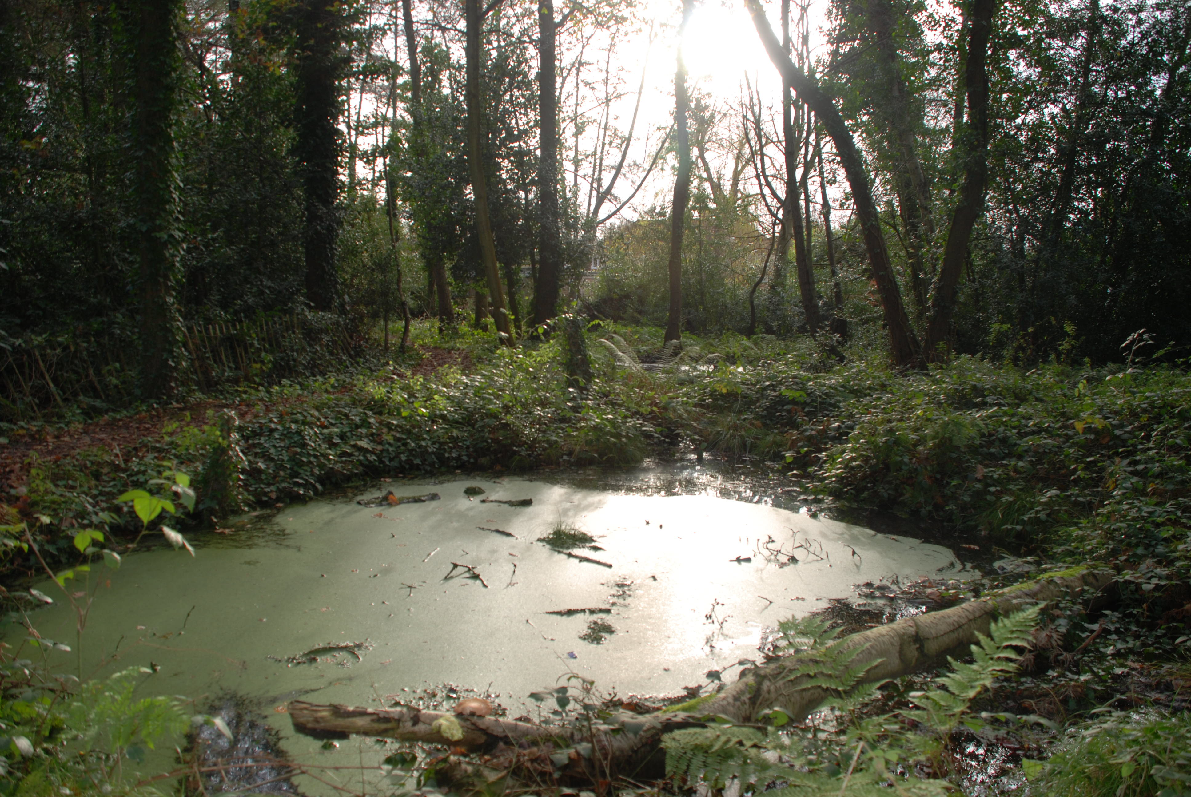 The large pond in December 2009