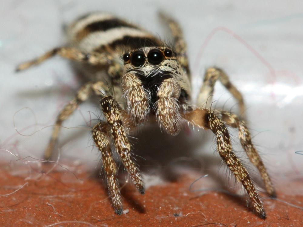 Ranger's Notebook - Spiders At Fleet Pond (1/4)