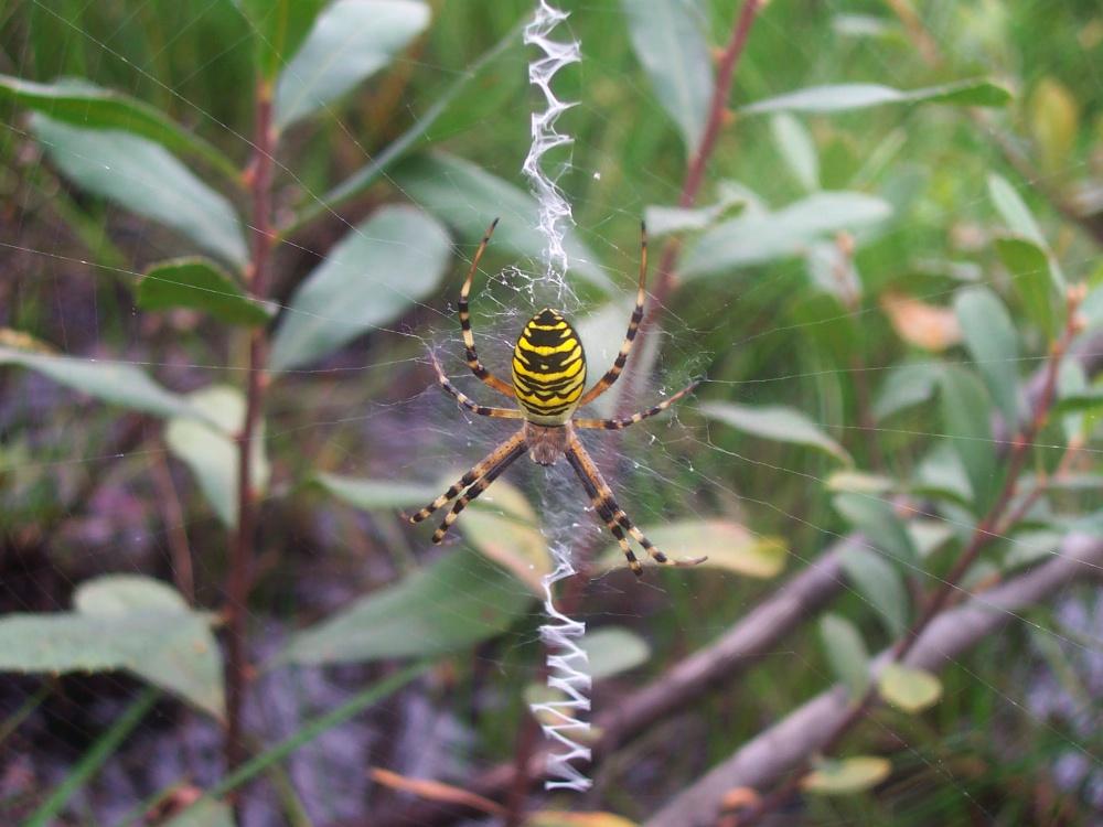 Ranger's Notebook - Spiders At Fleet Pond (4/4)