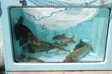 Fish taken from Fleet Pond