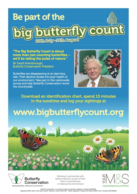 Butterfly Count 2013