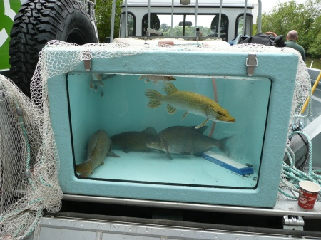 2014-05-31_WD Fish Tank 2