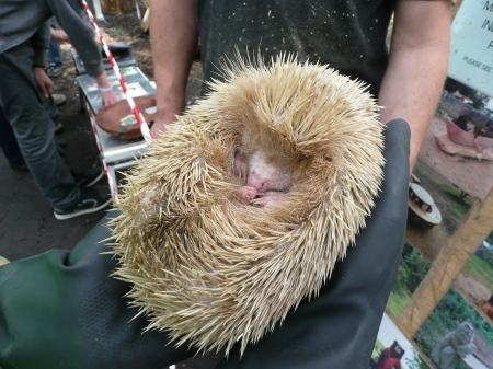 2014-05-31_WD Rescue Hedgehog 2