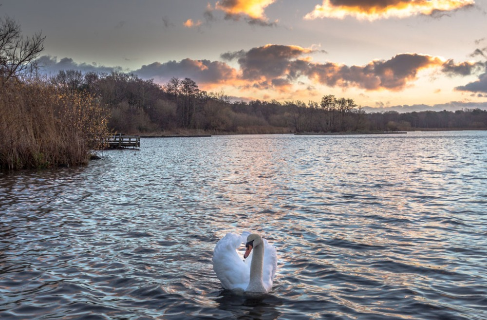 Local Photography Competitions And Fleet Pond