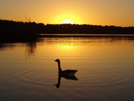 July-Chris-Straker-Fleet-Pond